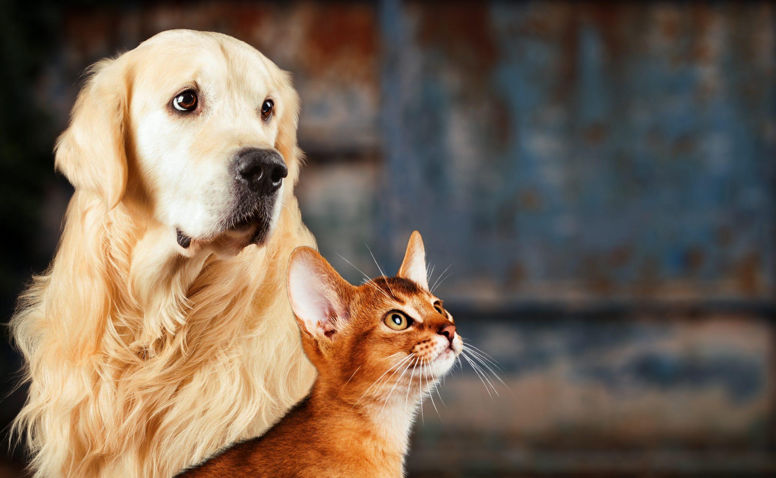 5 פתרונות טבעיים לשמירת הבריאות של חתולים וכלבים